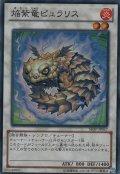 焔紫竜(ほむらりゅう)ピュラリス【傷あり】