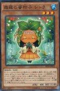 森羅の蜜柑子 シトラ